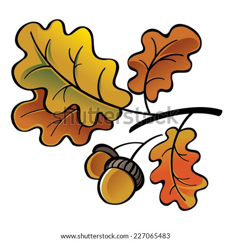 Oak leaves and acorns - autumn nature - stock vector