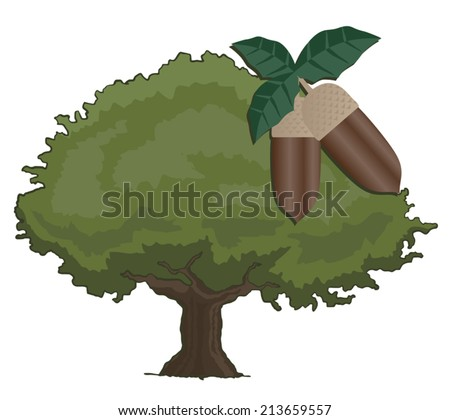 Oak tree - stock vector