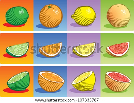 Old fashioned etched style illustration of various citrus fruit, depicted whole, sliced into a wedge, and sliced in half. - stock vector