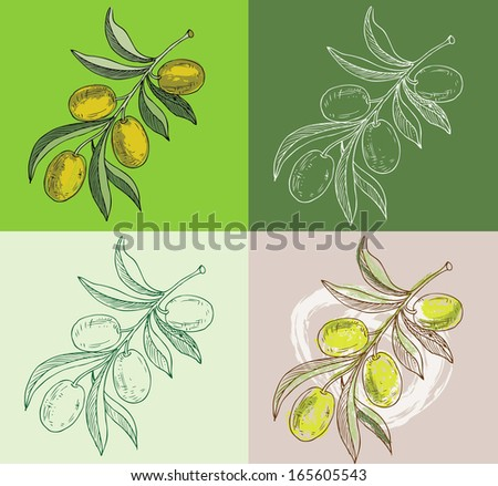 olive branches - stock vector