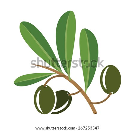 Olive oil vector illustration - stock vector