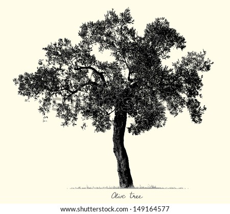 Olive Tree silhouette, vector - stock vector