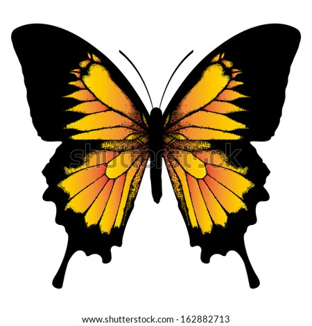 Orange butterfly isolated on white background - stock vector
