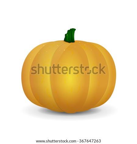 Orange isolated pumpkin in vector. Yellow pumpkin with drops - stock vector
