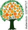 orange tree isolated on White background. Vector illustration - stock vector