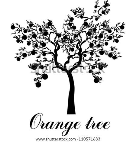orange tree isolated on White background. Vector ...  orange tree iso...