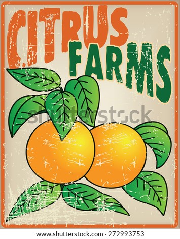 Oranges on the old card citrus farming. Vector illustration. - stock vector