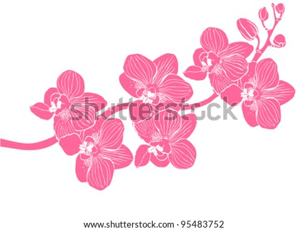 orchid flower vector background - stock vector