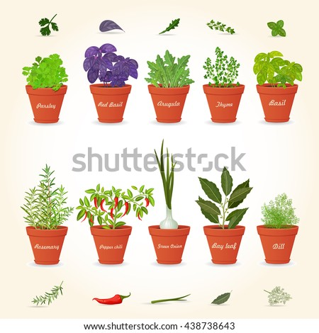 organic gourmet collection of different herbs planted in ceramic pots and fresh herb leaves and spices for your design - stock vector
