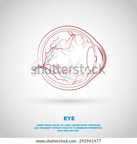 Outline eye plan with vessels. Illustration for school, institution or presentation. - stock vector