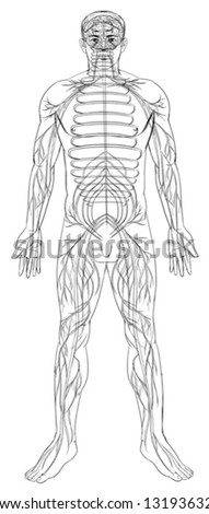 Outline illustration of the human nervous system - stock vector