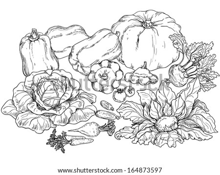 Outlines of various vegetables on white background. - stock vector