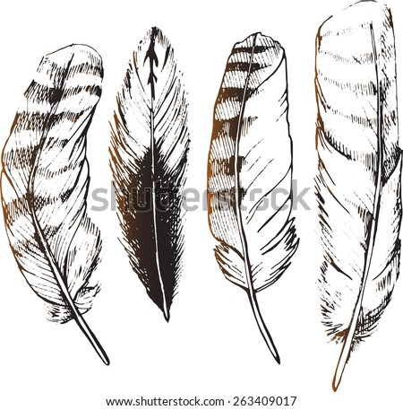 Owl feathers painted by hand. Sketch pens. Feathers bird of prey. - stock vector
