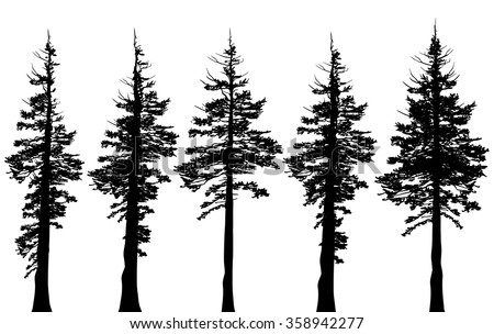 Pacific northwest old growth evergreen tree silhouette set - stock vector