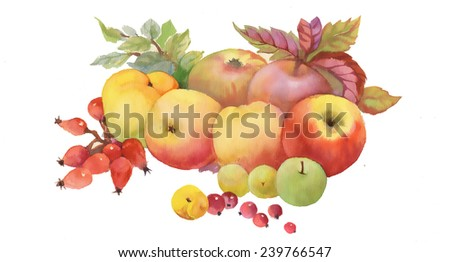 Painted autumn fruits and leaves on white background vector illustration - stock vector
