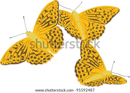 Painted Silver-washed fritillary butterfly. Vector EPS 10 - stock vector