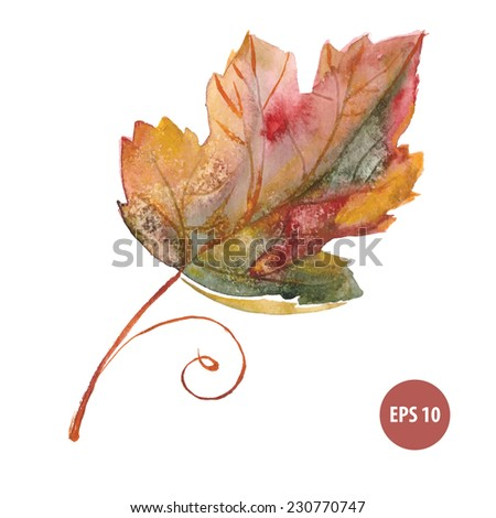 painting autumn foliage, watercolor leaf - stock vector