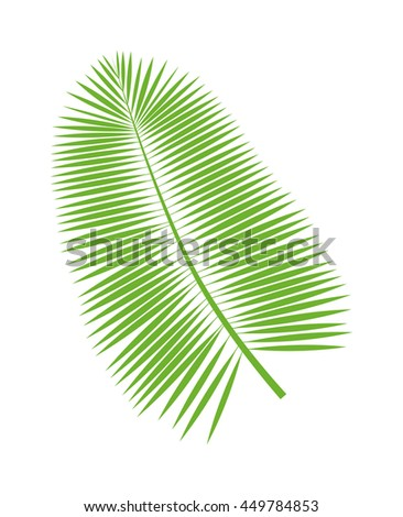 Palm leaf on white background. Palm leaf summer and nature green color plant foliage. Green palm leaf bright decoration and design natural colorful flat leaf. - stock vector