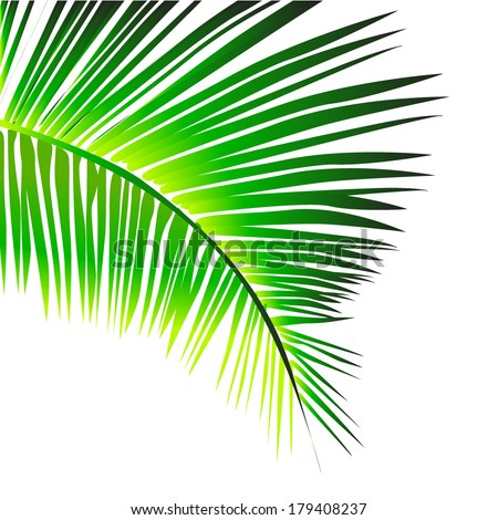 palm leaves. Vector - stock vector