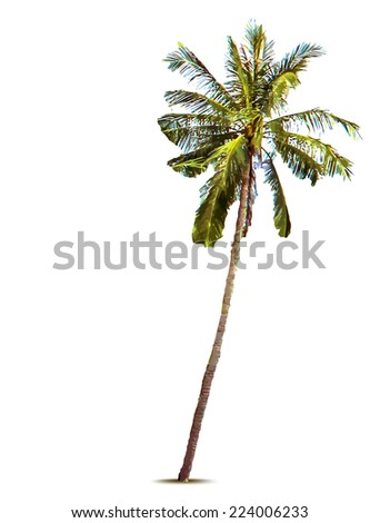 Palm tree. Vector illustration - stock vector