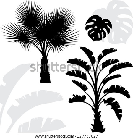 Palm trees black silhouettes on white background. - stock vector