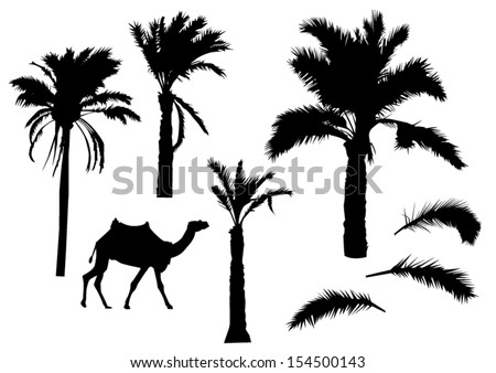 Palm trees silhouettes - stock vector
