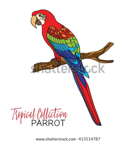 Parrot. Colored tropical bird. Vector illustration. - stock vector