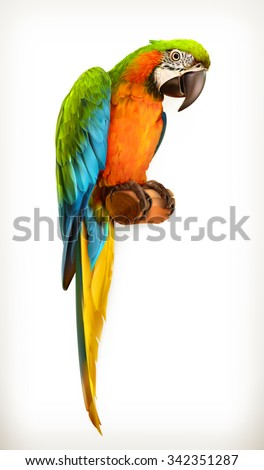 Parrot macaw, vector illustration - stock vector