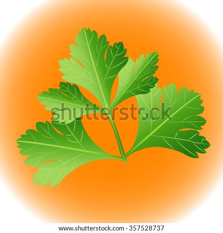 Parsley herb isolated on orange background. Vector illustration. - stock vector