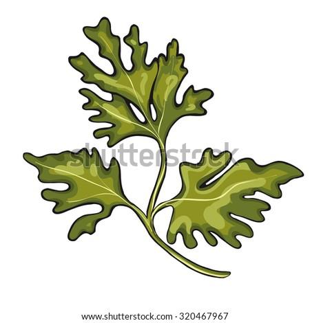 parsley vector element - stock vector