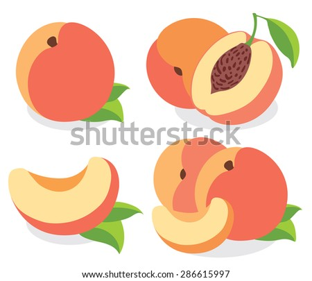 Peach fruits, collection of vector illustrations - stock vector