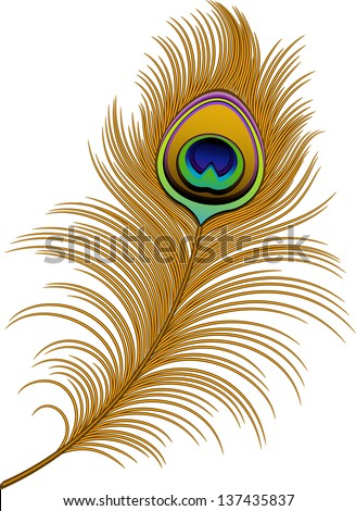 Peacock Vector Stock Photos Images amp Pictures Shutterstock