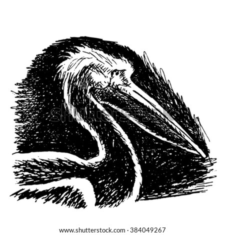 pelican sketch - vector - stock vector