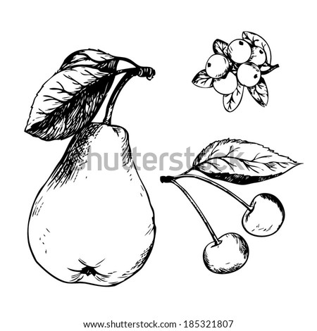 Pencil sketch of fruit vector. Pear, cranberries and cherries. - stock vector