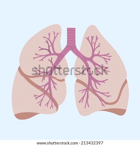 picture of human lungs, flat style icon - stock vector