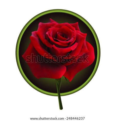 Picture of red rose in a round frame - stock vector