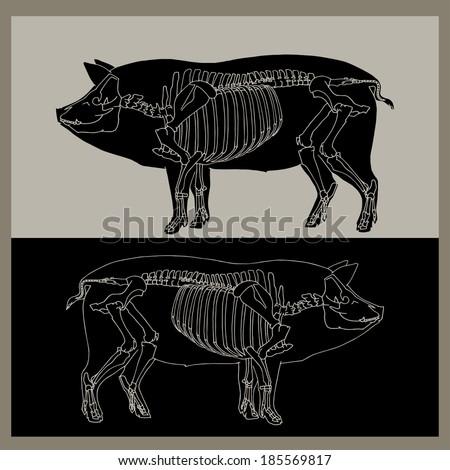 Pig skeleton - stock vector