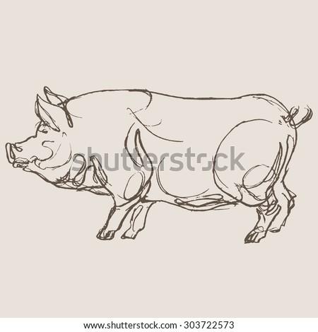 pig vector, hand draw sketch  - stock vector