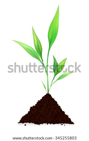 Pile of dirt and growing plant - isolated on white background. Vector illustration. - stock vector