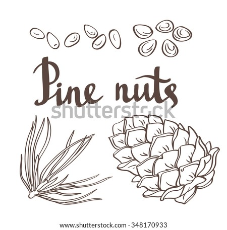 Pine nuts and pine cones. Hand drawn vector illustration. Isolated objects on the white background. - stock vector