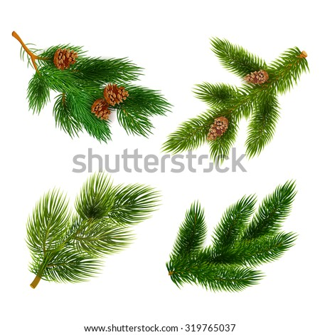 Pine tree branches with cones for chrismas decorations 4  icons set composition banner  realistic abstract vector illustration - stock vector