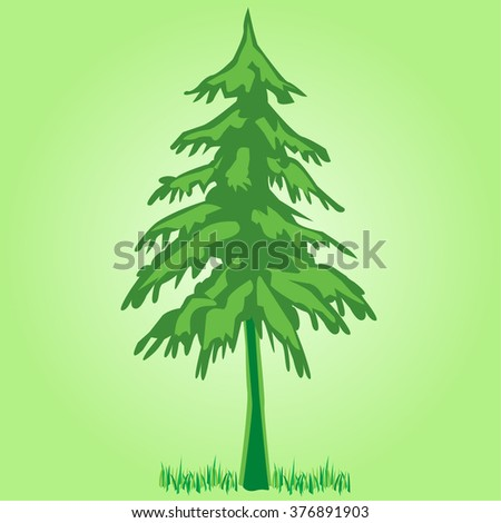 Pine Tree or Coniferous Tree - Illustration - stock vector