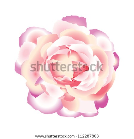 Pink beautiful rose. Vector illustration. - stock vector