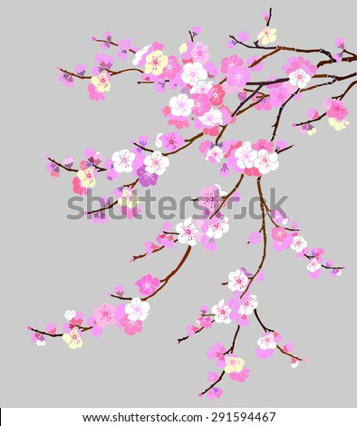 Pink Cherry blossom, sakura flowers isolated on gray background. Vector Illustration - stock vector
