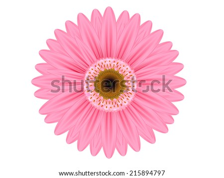 pink gerbera flower on white background  - stock vector