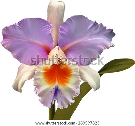 pink orchid isolated on white. Vector - stock vector