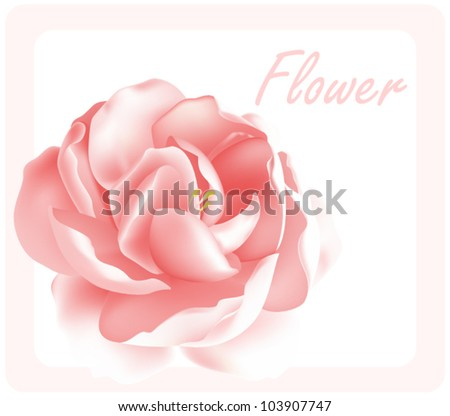 Pink peony on white postcard. Vector background. - stock vector