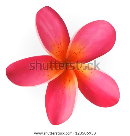Pink Plumeria flower isolated on white - stock vector