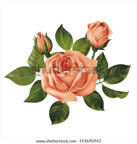 Pink rose on white. Vector illustration. - stock vector