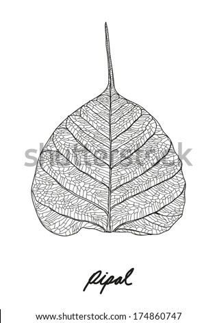 pipal leaf vector - stock vector